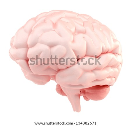3d human brain - organic version