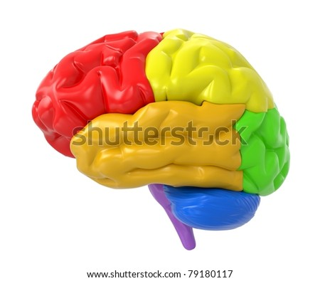 3d human brain with colored sections