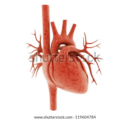 3d human heart isolated on white background