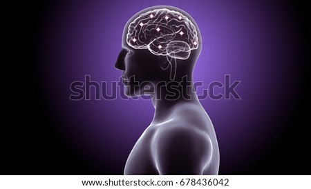 3d illustration of an active human brain system
