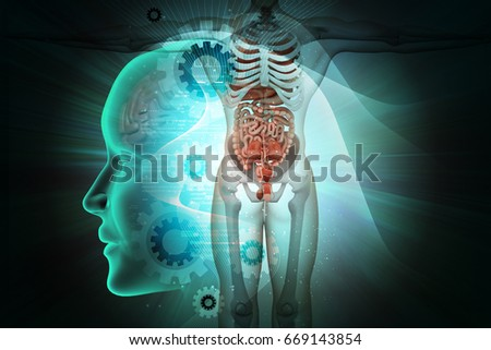 3d illustration of Human anatomy
