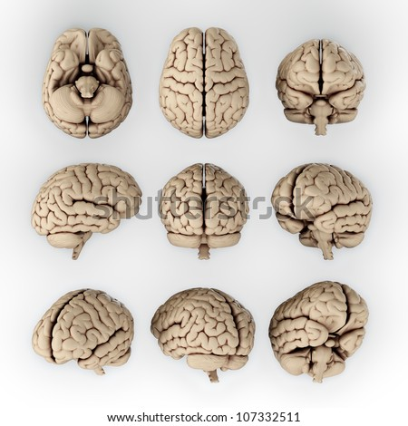 3D illustration of human brain in different angles