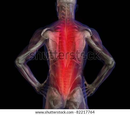 3D illustration of human male anatomy and skeleton. Back pain.