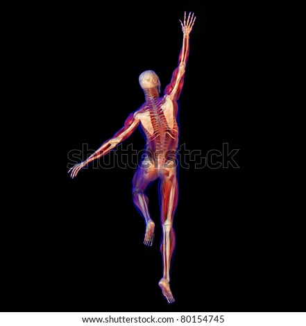 3D illustration of human male anatomy and skeleton. Jumping and stretching pose.