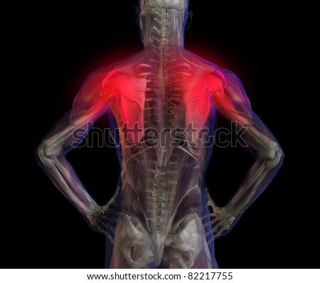 3D illustration of human male anatomy and skeleton. Shoulder and back pain.