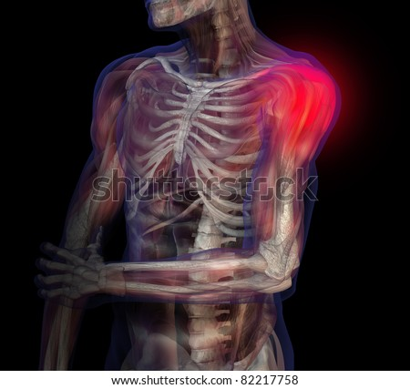 3D illustration of human male anatomy and skeleton. Shoulder pain.