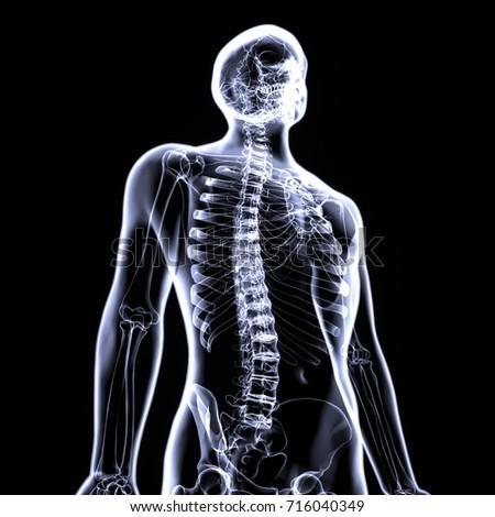 3d Illustration Of Skeleton Anatomy Ez Canvas