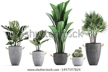 3d illustration of tropical plants on white background