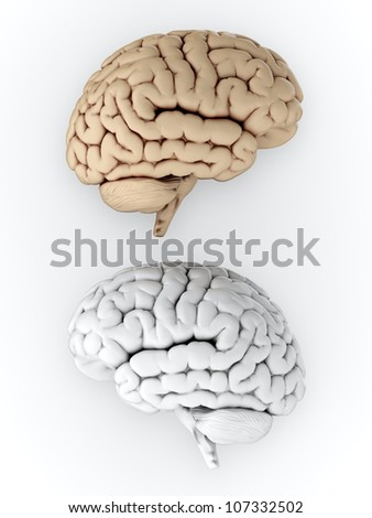 3D illustration of white and brown human brain on white background