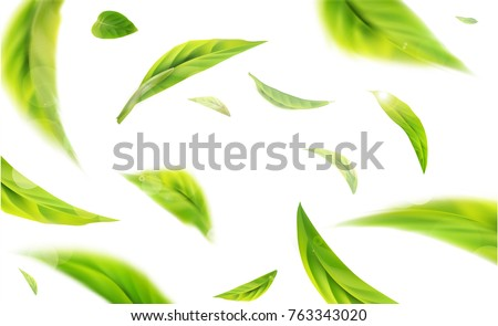 3d illustration with green tea leaves in motion on a white background. Element for design, advertising, packaging of tea products