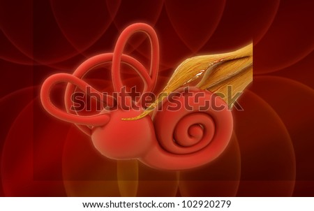 3d inner ear. cochlea on a color background