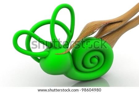 3d inner ear. cochlea on a white background