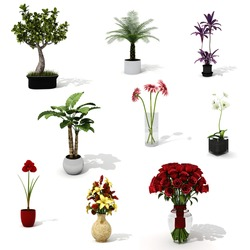 3d pack of beautiful home plants