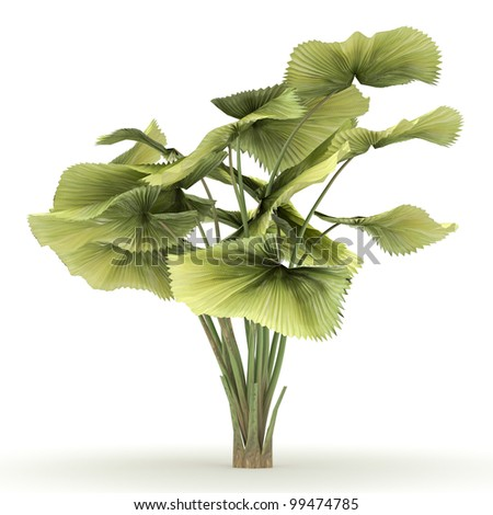 3d  parasol palm isolated over white