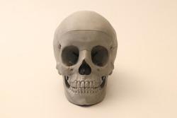 3d printed anatomical skull 3d scan