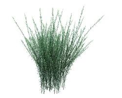 3d Render Brush Tree Isolated  on white background
