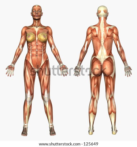 3D render depicting human anatomy muscles female