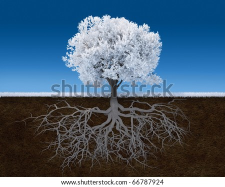 3d render illustration of a white tree with root