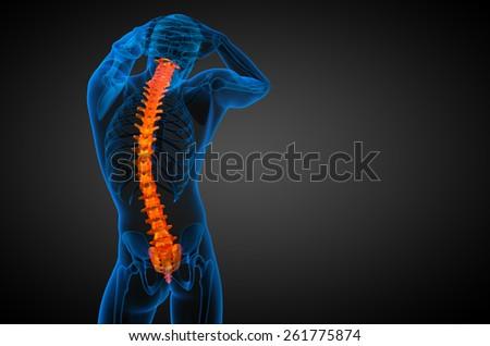 3d render medical illustration of the human spine - back view