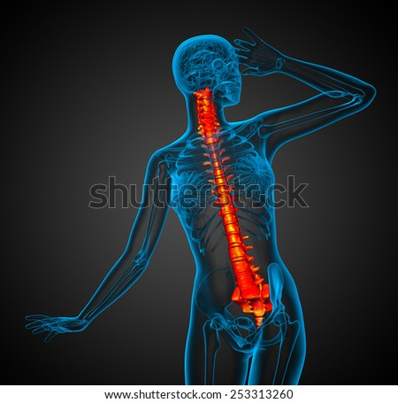 3d render medical illustration of the human spine - front view