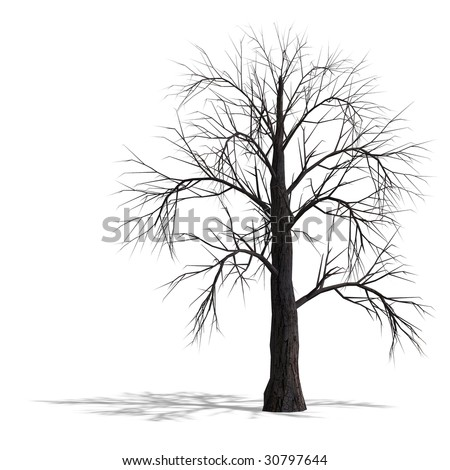 3D Render of a dead tree without leafs with shadow and clipping path over white