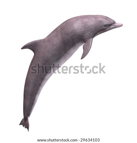 3D Render of a Dolphin With Clipping Path over white