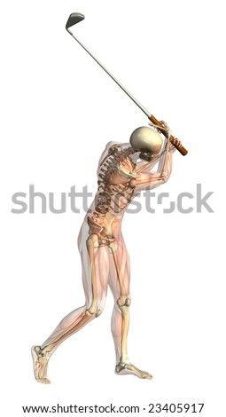 3D render of a male skeleton with semi-transparent muscles taking a golf swing.
