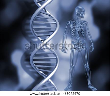 3D render of a medical skeleton stood next to DNA strands