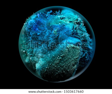 3d render of abstract glass ball with organic life inside like coral reef in intensive blue and green color on black background