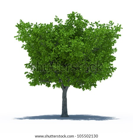 3d render of beautiful tree with shadow. Isolated on white background