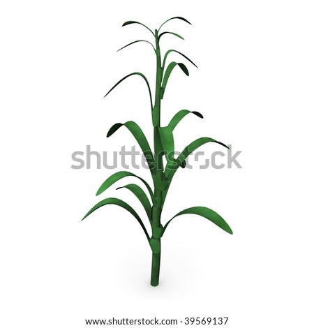 3d render of corn stalk