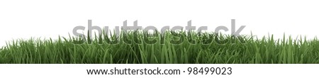 3D Render of Green Grass isolated on White