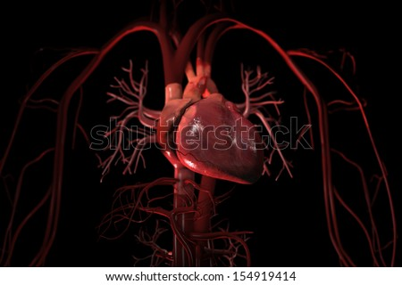 3D render of human circulatory system showing heart and major blood vessels in thorax on black background