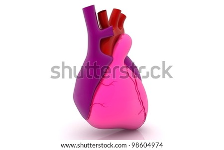 3d rendered human heart on white background