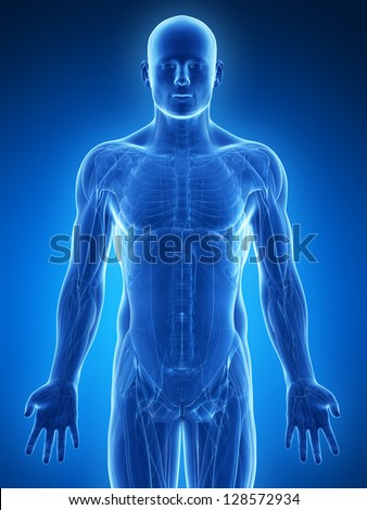 3d rendered illustration - male muscles - stock photo