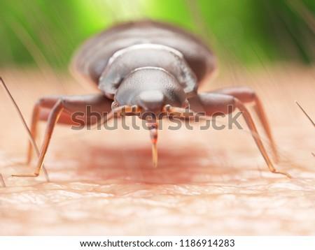 3d rendered illustration of a bedbug on human skin