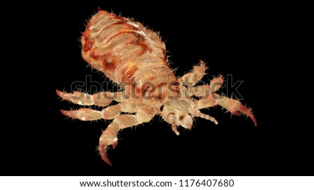 3d rendered illustration of a head louse