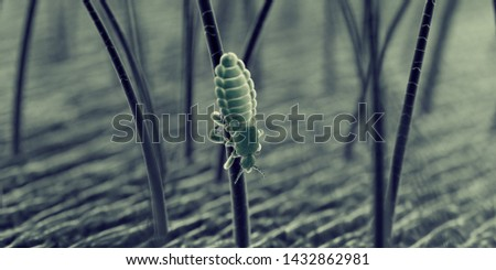 3d rendered illustration of a head louse, sem style