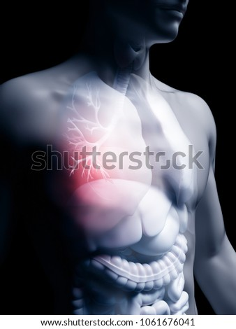 3d rendered medically accurate illustration of the human bronchi #1061676041