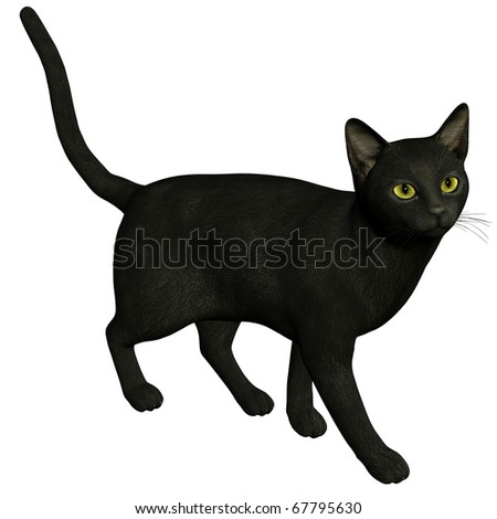 3d rendering a black cat  as  illustration