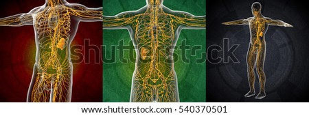 3d rendering illustration of the male lymphatic system