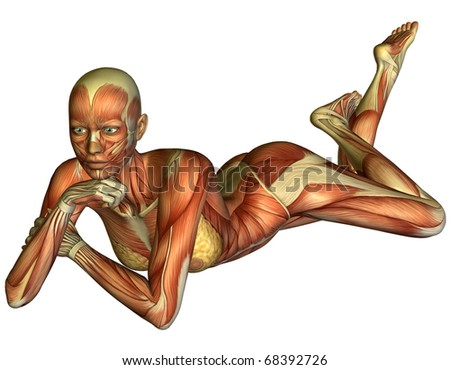 3D rendering muscle a reclining woman