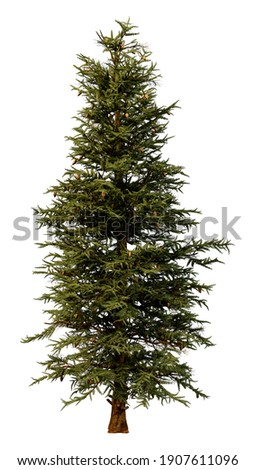 3D rendering of a blue spruce tree or Picea pungens or Colorado spruce isolated on white background