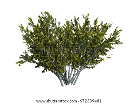 Shutterstock 3D rendering of a creosote bush or Larrea tridentata or greasewood or chaparral or gobernadora isolated on white background