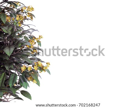 Shutterstock 3d rendering of a foreground flower branch isolated on white