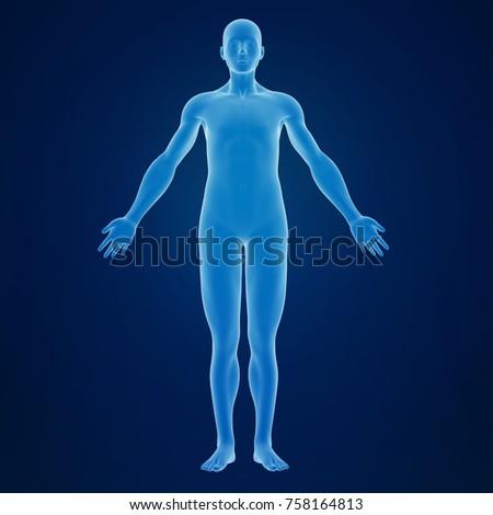 Shutterstock 3d rendering of an human body