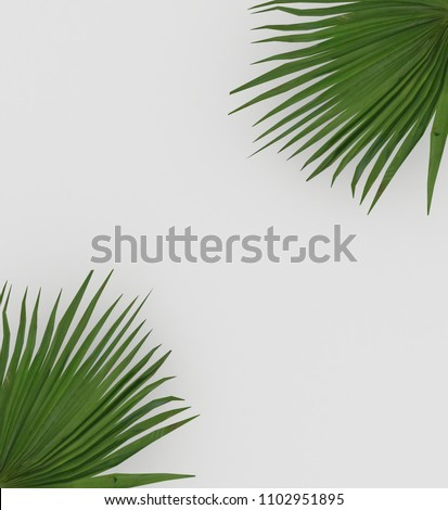 3D rendering of Creative leaves palm background Minimal concept paper tropical nature monstera illustration #1102951895