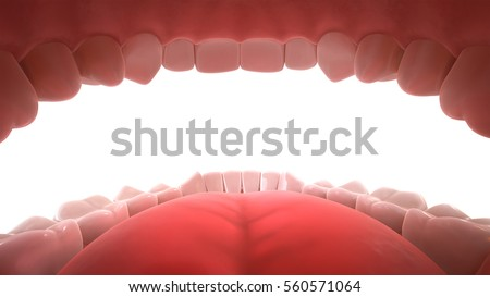 3d rendering of human teeth ...