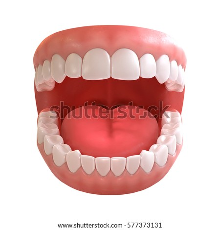 3d rendering of human teeth, open mouth on white background | EZ Canvas