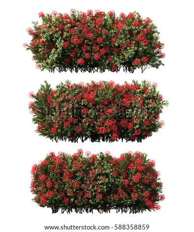 3d rendering of Ixora coccinea #588358859